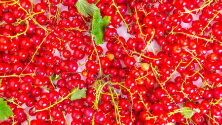 background of raw ripe juicy summer red currant berries Stock fotó