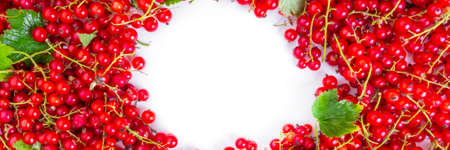 frame of raw ripe juicy summer red currant berries, rich in antioxidant and vitamin C, copy space