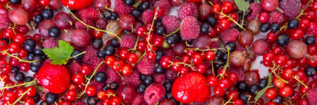 mix of summer organic berries strawberries, raspberries, black and red currant, gooseberries, agriculture and gardening. Harvest Concept