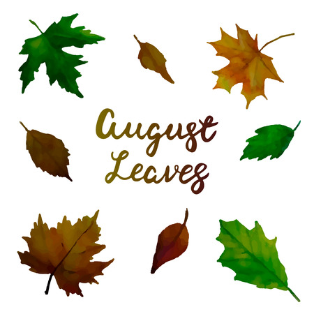 august: August leaves. Trend calligraphy. Vector illustration on white background . Beautiful set of leaves background. Elements for design. Illustration