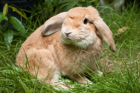 Cute rabbit playing in the grass field photo
