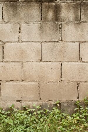 Solid blocks wall with green plants photo