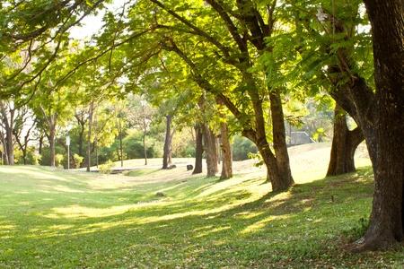 dia soleado: Vista de �rbol en el Parque