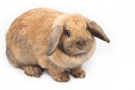 Cute young rabbit on white background Stock Photo - 9181039