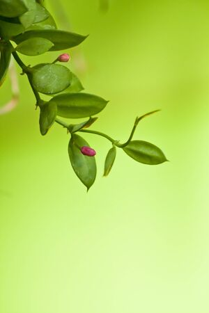 Abstract green plant with pink blossom photo