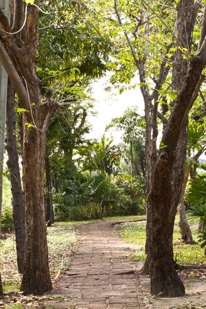Long Pathway through the garden photo