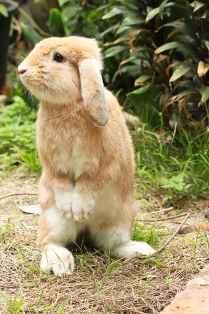 Cute rabbit standing in the garden field photo