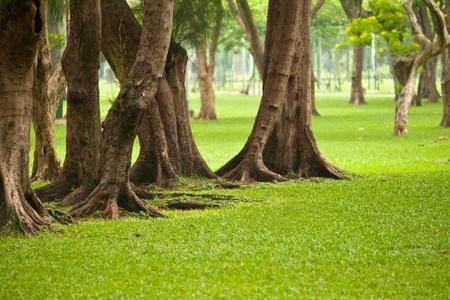 Beautiful green park in bangkok, Thailand