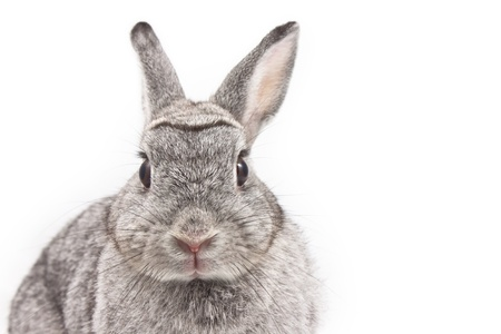 Cute rabbit on white background Stock Photo - 10483323
