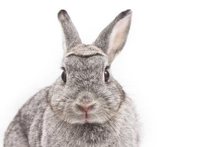 liebre: Lindo conejo sobre fondo blanco Foto de archivo