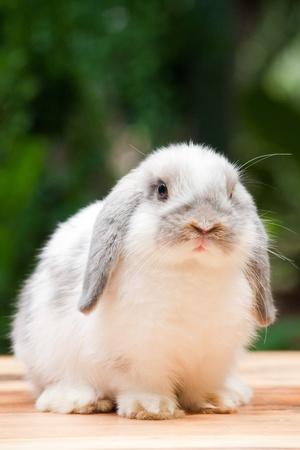 Cute Rabbit looking at you at outdoor