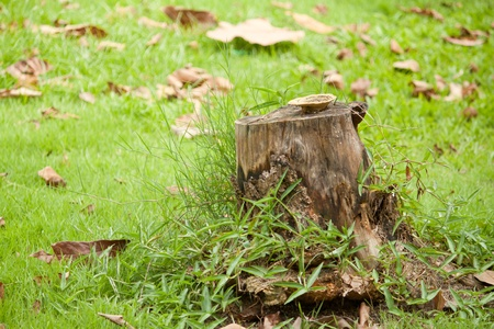 A abandoned die tree alone in the green grass field Stock Photo - 11004070