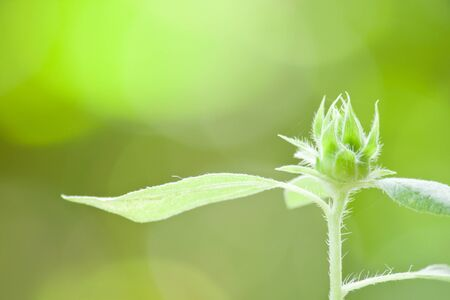 Top of new born green blossom from a plant on green background