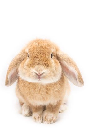 Cute rabbit on white background photo