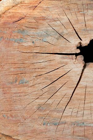 Detail of cut out log  texture  with broken  hole photo