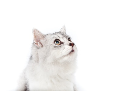 Cute young cat looking up on white background photo