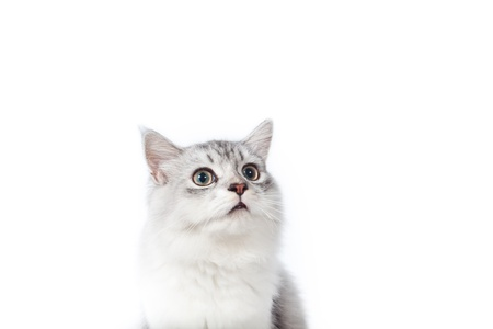 Cute young cat looking up on white background