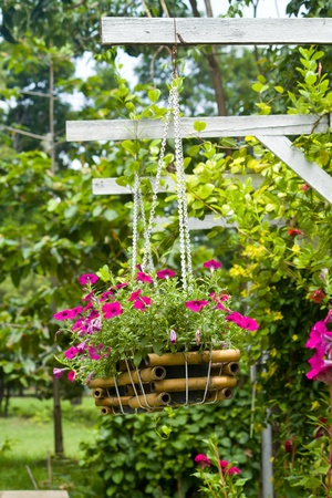 Flower plant in basket hanging in the garden photo