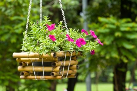 Flower plant in basket hanging in the garden