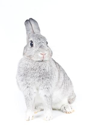 lapin blanc: Gros plan de lapin mignon sur fond blanc