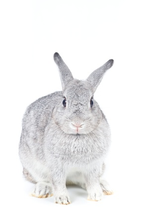 Closeup of  cute rabbit  on  white background photo