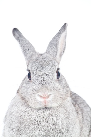 Closeup of  cute rabbit  on  white background