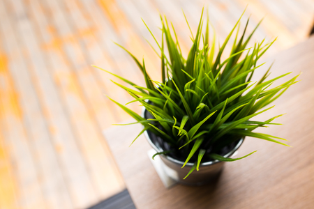 Interior plant decoration in office building photo