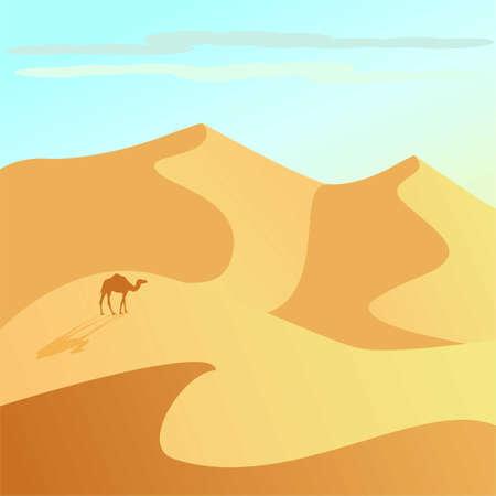 A camel and desert