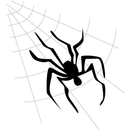 Vector spider web and spider on a white background.