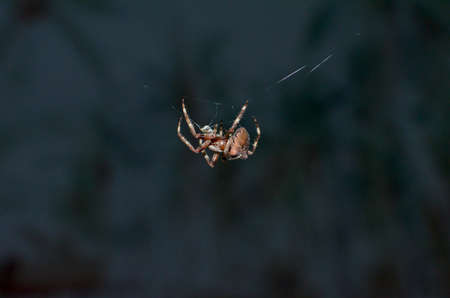 Spider on a spider web with a dark background