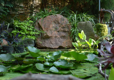 beautiful pond with water lilies among the rocks