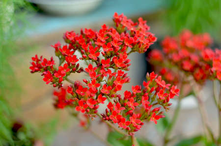 beautiful very small red flowers