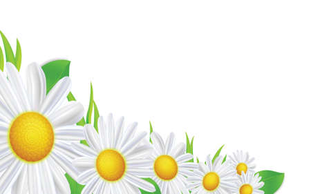 Spring flowers frame composition. Bright summer  background design with daisy.