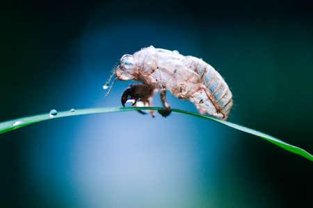 딱정벌레는 나뭇 가지에 앉는다.