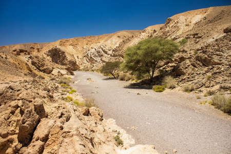 Negev sand stone desert dry landscape rocky canyon passage wasteland with lonely green trees
