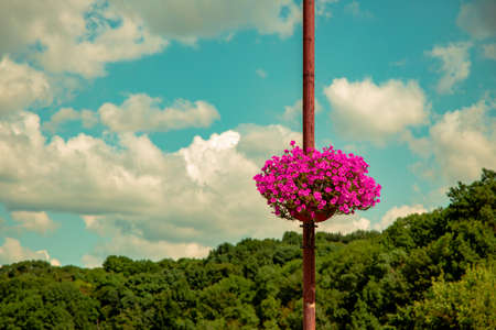 spring time blossom season park outdoor scenic view street lantern purple flowers vase green trees and blue sky background wallpaper empty copy space for your text