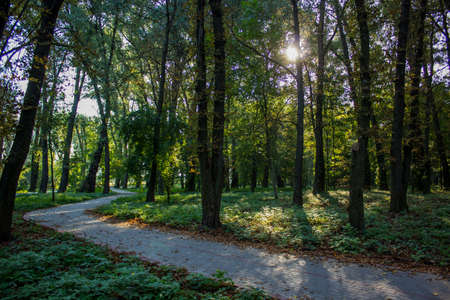 morning park outdoor place with sunny weather and sun rays between trees empty paved cycle road way