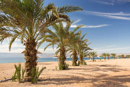 summer time luxury palm beach tropic landscape scenic view beautiful vacation destination place in Middle East Jordan coast line on Red sea waters, palm trees and sand ground, blue sky
