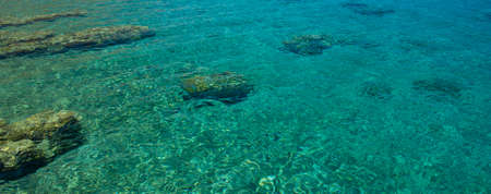 coral reefs shallow water sea landscape bottom in tropic region of the Earth, scenic top view copy space