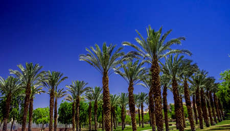 palm trees park outdoor city square ecological green space for walking and promenade, bright colors and summer hot season weather day time