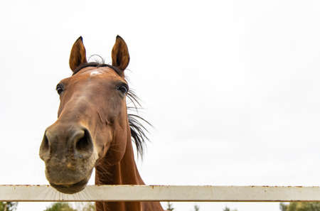 funny horse portrait soft focus on eyes looking at camera from above on gray sky background copy space
