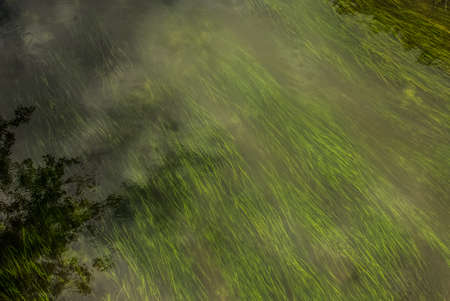 seaweed in water river stream nature scenery landscape top view from above copy space