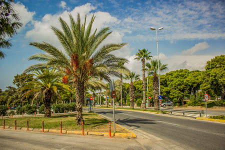 south tropic city building landmark and park outdoor clear weather summer scenic urban view with street car road and palms on vivid blue sky background space