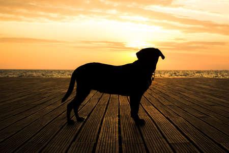 beautiful Labrador Retriever dog black silhouette shape in romantic shot opposite sunset orange light in waterfront sea shore line landscape copy space 스톡 콘텐츠