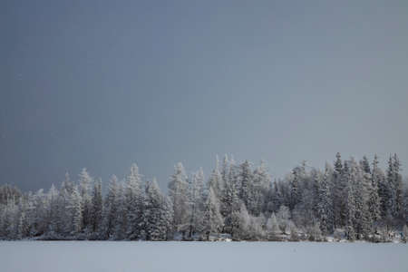 winter forest landscape snowfall weather time wilderness nature outdoor scenic view copy space for text Standard-Bild - 140373289