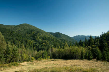 summer Carpathian mountains green hills foliage highland landscape national park nature scenic view copy space Zdjęcie Seryjne