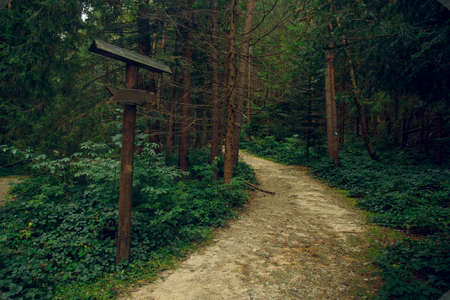 sing board pointer in wood land pine forest moody landscape nature environment near route dirt trail between trees green foliage without people here