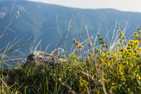 beautiful soft focus local natural scenic soft focus macro shot of stone and grass wilderness mountain environment with unfocused background, hiking and freedom world wallpaper concept picture