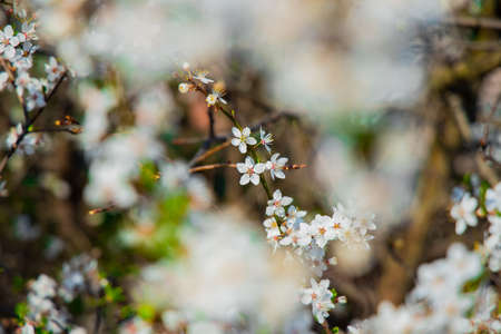 white flower garden foliage April spring blooming nature scenery photography concept unfocused foreground