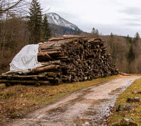 deforestation wood pile ecological problem human corruption about nature concept picture from European Union territory in alps mountains scenic environment space Imagens